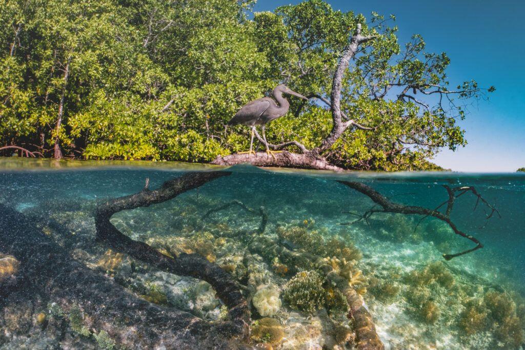 En los últimos años se han puesto en marcha iniciativas para evitar el deterioro de estos ecosistemas de carbono azul y también para fomentar su repoblación. (GettyImages)